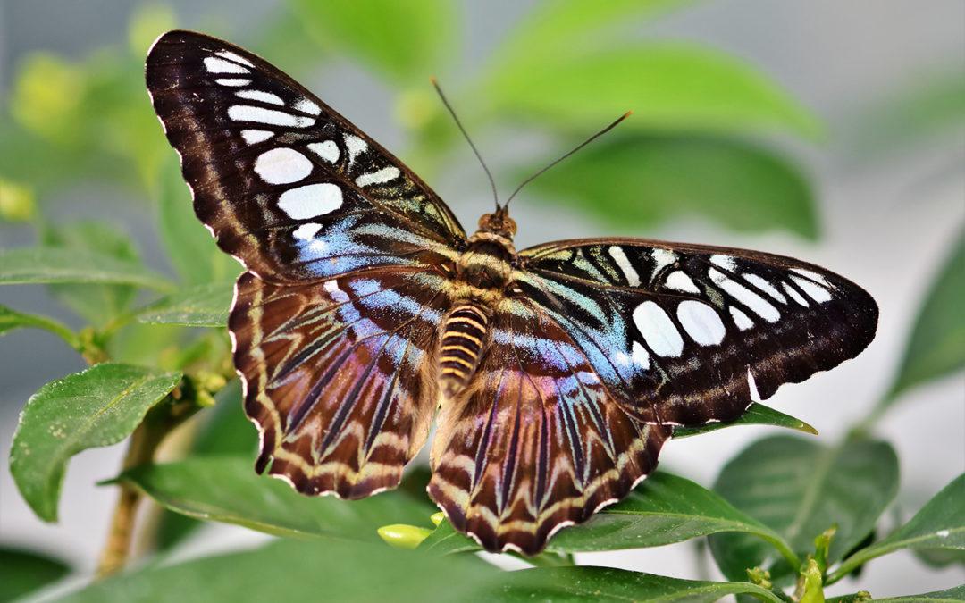 A Butterfly Is Not a Better Caterpillar